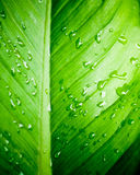 Closeup of water drops on green leaf Stock Photography