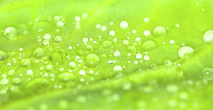 Closeup water drops on leaves green Royalty Free Stock Photography