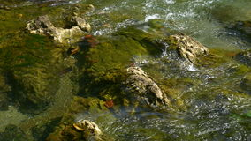 Closeup of water flowing over rocks stock footage