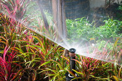Closeup of water sprinkler Stock Images