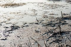 Water surface with gas bubbles in a swamp up close. Closeup of the water surface in a swamp. There are gas bubbles and stems of dead plants. It is winter now Stock Image