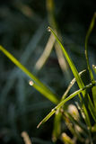 Closeup of waterdrops. Macro photography of waterdrops in nature stock photography