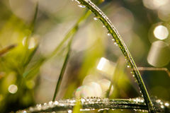 Closeup of waterdrops. Macro photography of waterdrops in nature royalty free stock image