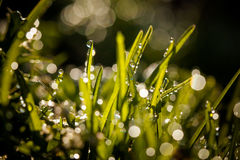 Closeup of waterdrops Royalty Free Stock Photography