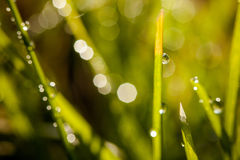 Closeup of waterdrops. Macro photography of waterdrops in nature stock image