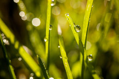 Closeup of waterdrops. Macro photography of waterdrops in nature royalty free stock photo