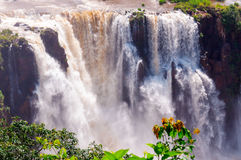 Closeup Waterfalls, Iguassu Falls, Brazil Royalty Free Stock Images