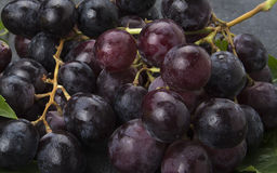 Closeup of wet black grapes cluster on kitchen top Stock Image