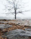 Closeup of wet flagstone with blurred tree in background Royalty Free Stock Photos