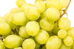Closeup of Wet Green Seedless Grapes Stock Photography