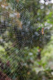 Closeup of a wet spiderweb Royalty Free Stock Image