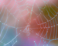 Closeup of a wet spiderweb wtih dew drops Royalty Free Stock Photos