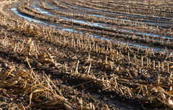 Closeup of a wet stubble field in autumn Stock Photos