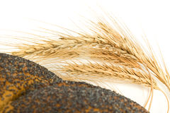 Closeup of wheat corn and bagel  isolated Royalty Free Stock Image