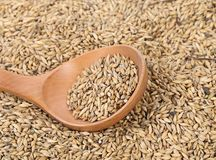 Closeup of wheat grains with wood spoon. Stock Image