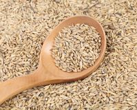 Closeup of wheat grains with wood spoon. Royalty Free Stock Images