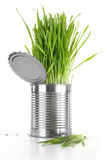 Closeup of wheatgrass in an aluminum can on white Stock Photo