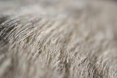 Closeup of white dog fur Royalty Free Stock Photo