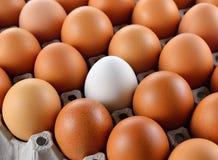 Closeup of white egg Stock Photos