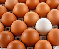 Closeup of white egg laying block paper Stock Photos