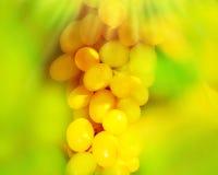 Closeup on a white grape Royalty Free Stock Photos