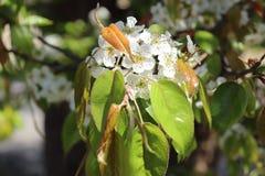 Closeup of white Jungle floret royalty free stock photos