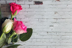 Closeup of white and pink roses Stock Images
