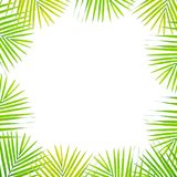 Closeup white space at the center of frame by green palm leaves isolated on white background. Closeup white space at center of frame by green palm leaves Royalty Free Stock Image