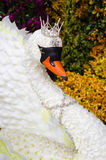 Closeup the White Swan Queens was invented by flowers. And displayed at department stores in Thailand Stock Images