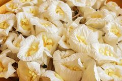 Closeup white and yellow Sandalwood flowers or artificial flowe. Close up white and yellow Sandalwood flowers or artificial flowers on the golden tray with Royalty Free Stock Images