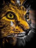 Closeup of a wild cat. Still shot of a wild cat in closeup royalty free stock photos