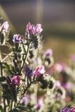 Closeup of Wild flowers in backlight .Spring  Summer Grass Boke. H natural background Stock Images