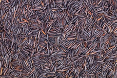 Closeup of wild rice Stock Photography