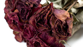 Closeup of withered roses Royalty Free Stock Photos