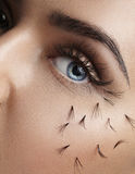 Closeup of woman eye with falling lashes. On cheek Royalty Free Stock Photos