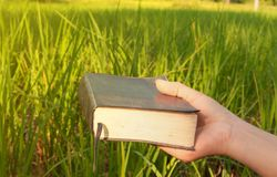 Closeup Woman hand holding bible in field. stock photography