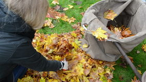 Closeup woman hands gloves load tree leaves bag. autumn works. Closeup woman hands gloves load colorful tree leaves in bag. autumn works in garden stock footage