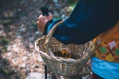 Closeup of woman hiker mushrooms hunter holding a basket with mushrooms royalty free stock photo