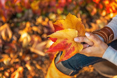 Closeup on woman holding autumn leaf Stock Photo