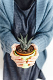 Closeup of a woman holding a cactus in a pot Stock Images