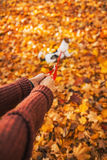 Closeup on  woman holding dog on leash outdoors in autumn Royalty Free Stock Photos