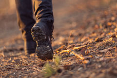 Closeup of woman legs hiking in nature at sunset. Stock Image