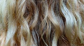 Woman hair. Closeup of a woman's hair. Blonde royalty free stock photo