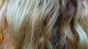 Woman hair. Closeup of a woman's hair. Blonde stock photography