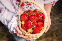 Closeup of woman`s hands holding basket with organic garden summer strawberry berries. Healthy lifestyle and healthy eating.Fruit Royalty Free Stock Images