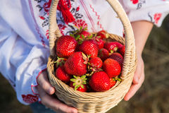 Closeup of woman`s hands holding basket with organic garden summer strawberry berries. Healthy lifestyle and healthy eating.Fruit. Closeup of woman`s hands Royalty Free Stock Image