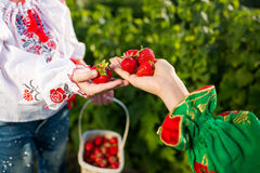 Closeup of woman`s hands holding basket with organic garden summer strawberry berries. Healthy lifestyle and healthy eating.Fruit. Closeup of woman`s hands Stock Photos