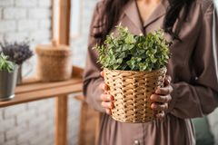 Woman`s hands holding wicker pot with plant. stock image