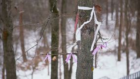 Closeup of woman tying a ribbon to the wishing tree. Traditions, symbol of luck. HD stock footage