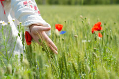 Closeup on woman walking in a field of poppies Royalty Free Stock Photos